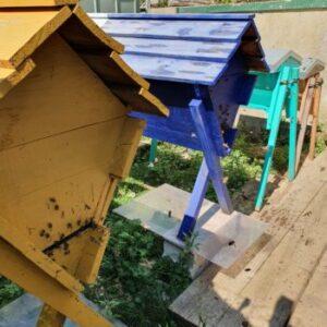 Les ruches à abeilles de Philippe